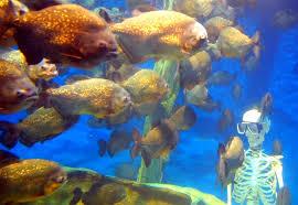 Langkawi Underwater World Tickets
